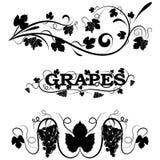 Redemoinhos elegantes do vetor com uvas Imagem de Stock Royalty Free