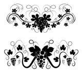 Redemoinhos elegantes do vetor com uvas Foto de Stock Royalty Free