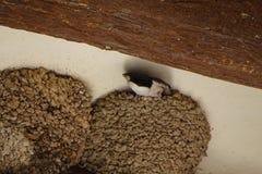 Redes de los tragos detalladamente en la madera de un techo Imágenes de archivo libres de regalías
