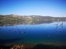Redes de pesca na Croácia fotos de stock