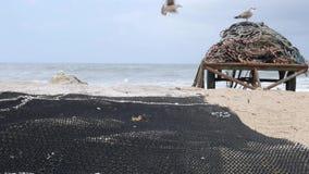 Redes de pesca que se secan en el muelle en el puerto en Portugal, con las gaviotas en fondo metrajes