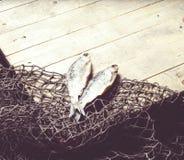 Redes de pesca y aún-vida secada de los pescados en el fondo de madera Imagen de archivo libre de regalías