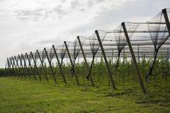 Redes protectoras en manzanos Foto de archivo