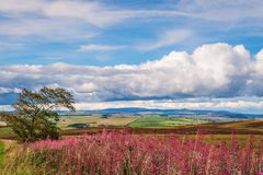 Redesdale Valley and Cheviot Hills Royalty Free Stock Photos