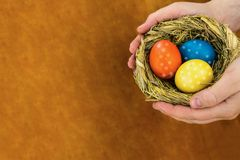 Redet färgade ägg semestrar symbolpåsk i händer på en träbakgrund och kopierar utrymme royaltyfria bilder