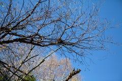 Redet på trädet, i nedgångskogen, Kanada royaltyfria foton