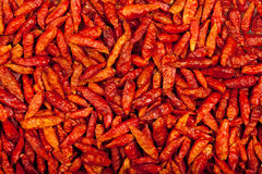 Redeye chili background Royalty Free Stock Photography