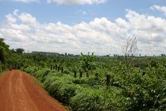 Redf earth. Road in the mountains of Ratanakiri, cambodia Royalty Free Stock Photo
