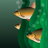 Redfins flock. Fish look out of algae. Under the water. Vector illustration Royalty Free Stock Images
