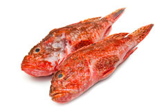 Redfish Stock Photos