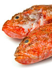 Redfish Stock Photography