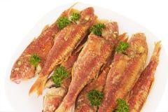 Redfish Royalty Free Stock Photos