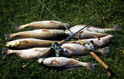 Redfish fångar och stången med rullar Royaltyfria Foton