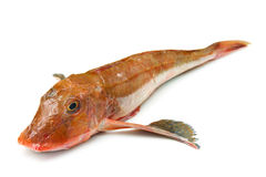 Redfish Stock Images