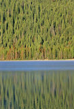 Redfish Lake and Pine Trees at Sunrise, Idaho Stock Image