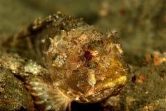 Redfish yellow Stock Photo