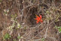 redflower op een struik Royalty-vrije Stock Afbeelding