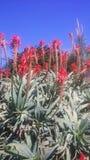 Redflowers i busken Royaltyfria Bilder