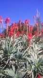 Redflowers no arbusto imagens de stock royalty free