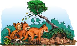 Redfox cubs royalty free illustration