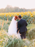 Redhair bride and handsome groom tenderly embracing in a sunflower field. Back view Stock Photography