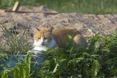 Redhead γατάκι Στοκ φωτογραφία με δικαίωμα ελεύθερης χρήσης