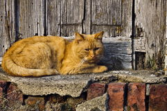 Redhead cat. On the village street Stock Photos