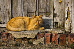 Redhead cat. On the village street Stock Images