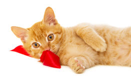 Redhead cat lies on the floor Stock Photos