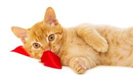 Redhead cat lies on the floor Stock Photos