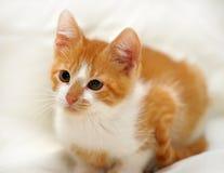Redhead cat looking Stock Photo