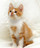 Redhead cat looking Royalty Free Stock Photo