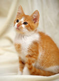 Redhead cat looking Stock Images