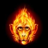 Redhead Fire Monkey Royalty Free Stock Photo