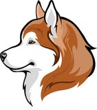 Redhead Huskies. Vector illustration red Siberian Husky Royalty Free Stock Photo