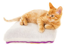 Redhead kitten lies on a pillow Royalty Free Stock Photos