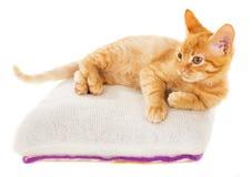 Redhead kitten lies on a pillow Royalty Free Stock Photos