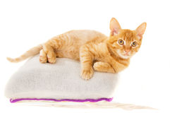 Redhead kitten lies on a pillow Royalty Free Stock Photo
