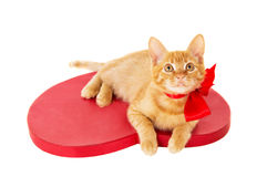 Redhead kitten with ribbon sitting on the heart Royalty Free Stock Photo
