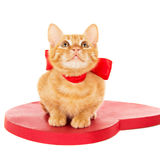 Redhead kitten sitting on the heart Royalty Free Stock Photography