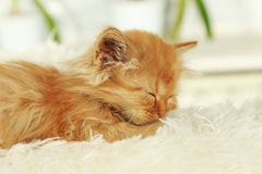 Redhead kitten sleep on white plaid Stock Images