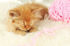 Redhead kitten sleep on white plaid Royalty Free Stock Image