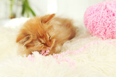 Redhead kitten sleep on white plaid Royalty Free Stock Photo