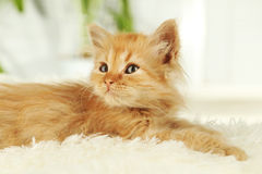 Redhead kitten on white plaid Royalty Free Stock Photos