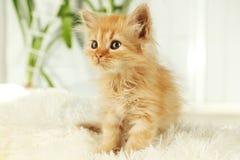 Redhead kitten on white plaid Stock Photography