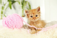 Redhead kitten on white plaid Stock Images