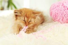 Redhead kitten on white plaid Royalty Free Stock Image