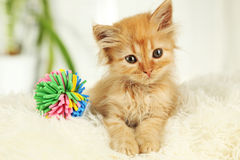 Redhead kitten on white plaid Royalty Free Stock Images