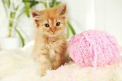 Redhead kitten on white plaid Stock Photo