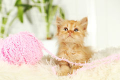 Redhead kitten on white plaid Stock Image